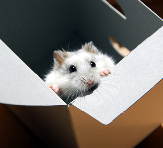 hamster in a box