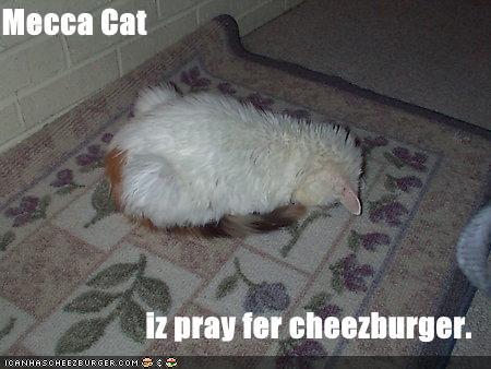 meccacat