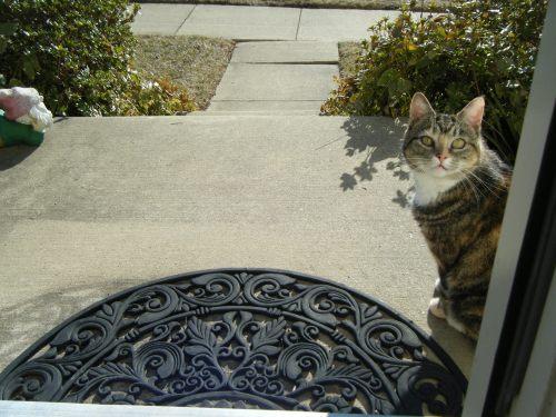 cat-outside-front-door