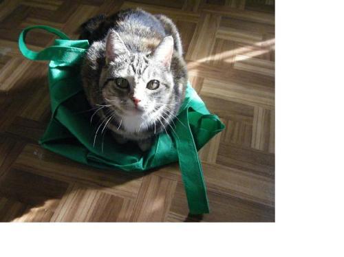 beautiful-cat-in-light-smaller1