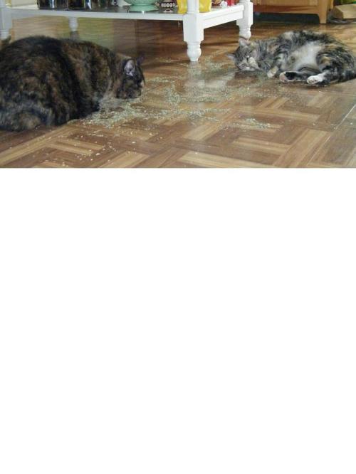 catnip spill2 edited