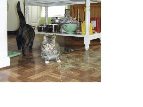 catnip spill3 edited