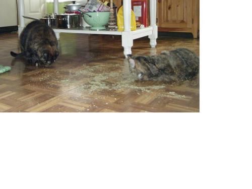 catnip spill4 edited
