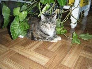 2008_0907mostlycats0019