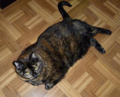 tortie tortoiseshell cat dark linoleum floor