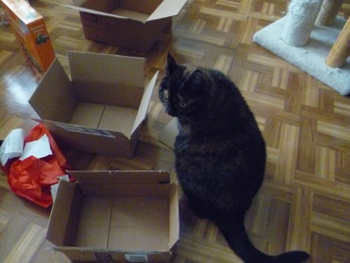 tortoiseshell boxes xmas morning christmas