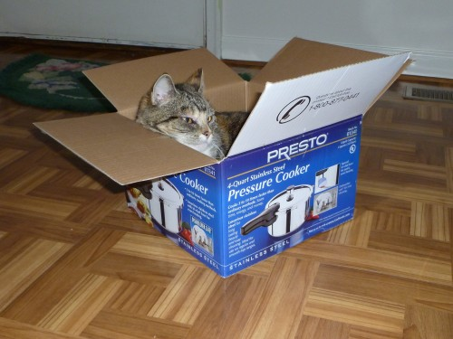 calico cat pressure cooker box chillin xmas christmas
